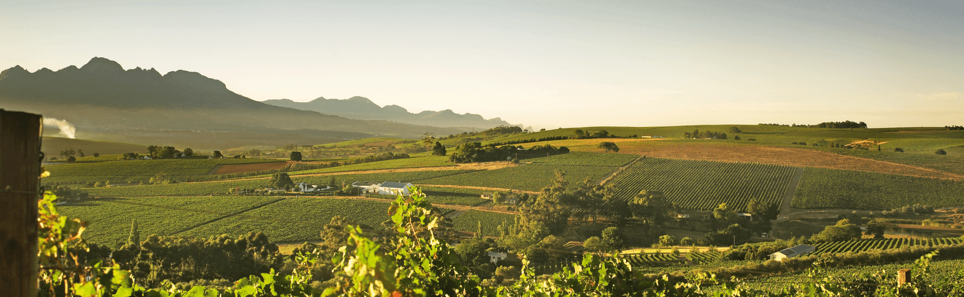 Landscape of hills, vineyards and mountains.